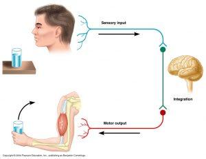 Neuropati menyerang saraf ini