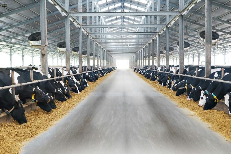 sumber susu sapi