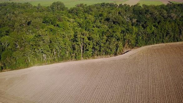 gambar penggundulan hutan