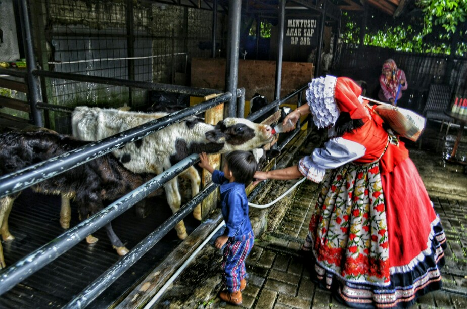 Petting zoo di Farm House Lembang