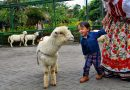 Petting zoo di Farm House