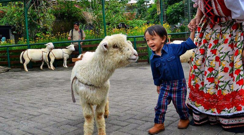 Petting zoo di Farm House
