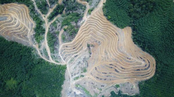 Dampak penggundulan hutan deforestasi adalah