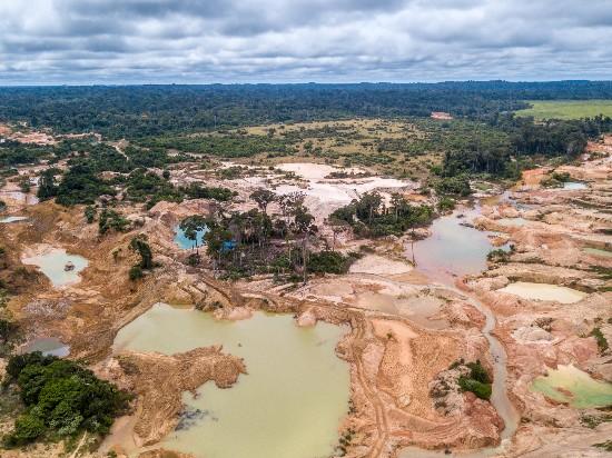 dampak penggundulan hutan