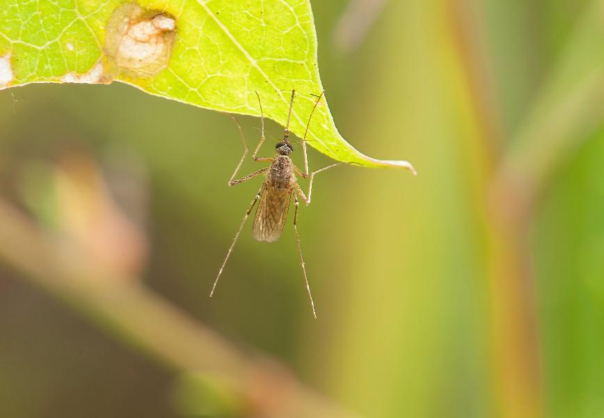 Nyamuk malaria tumbuh di lingkungan dekat lahan bekas penggundulan hutan